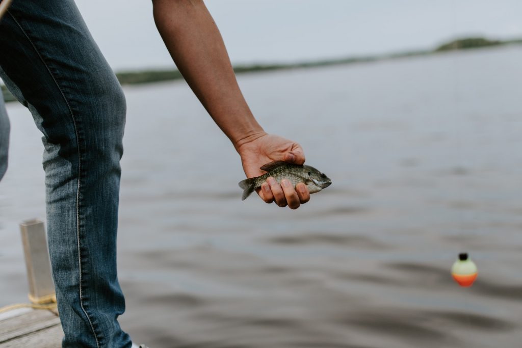 What is the Best Time of Day to Catch Bluegill