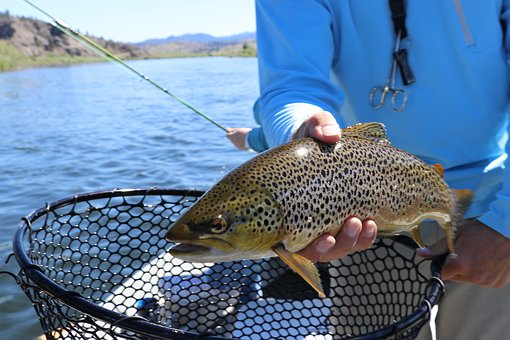 best trout fishing lakes in california