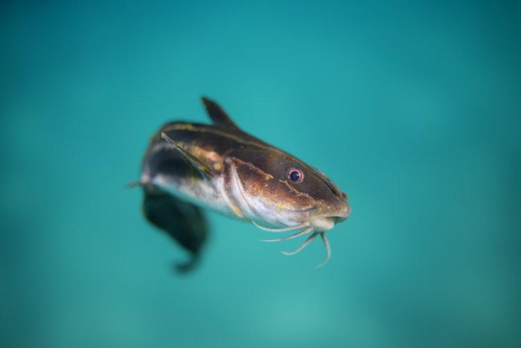 Best Rod Holders For Catfishing