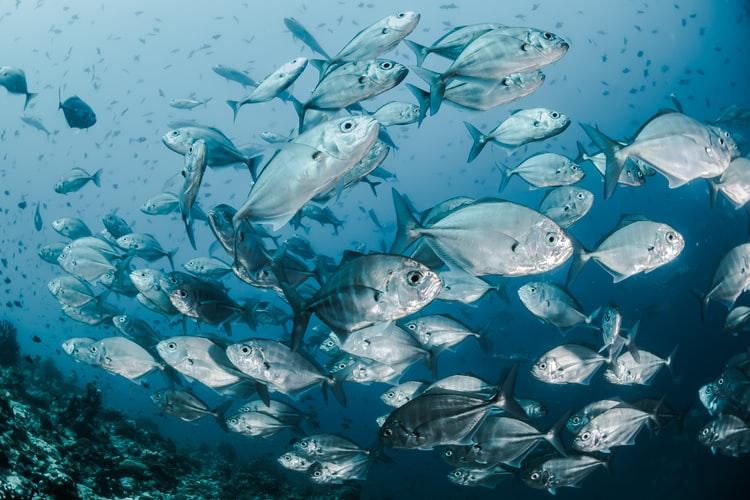 Best Fishfinder GPS Combo Under $300