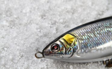 Best Topwater Lures for Saltwater